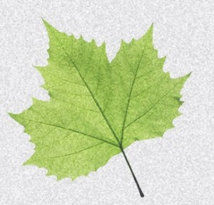 noisy_leaf